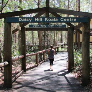 Daisy Hill Koala Sanctuary